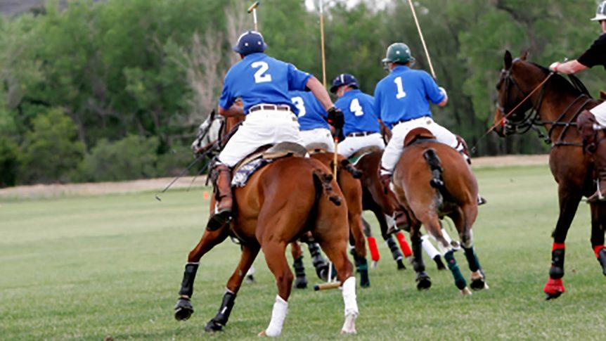 hauling horse polo horse transportation